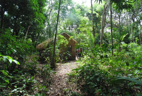 Forest amazon