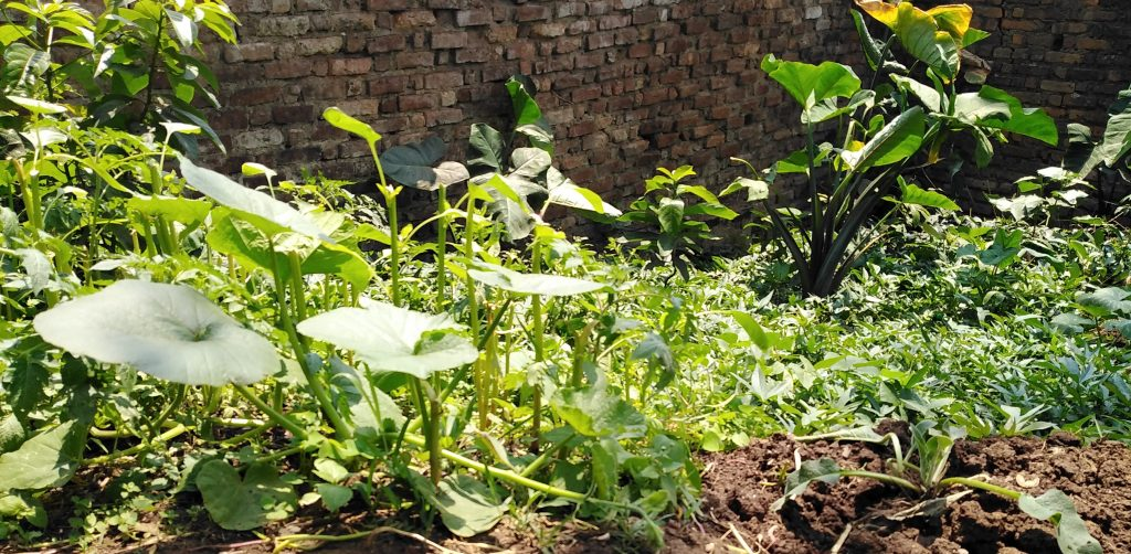 idier Mugalihya - Home Garden Approach