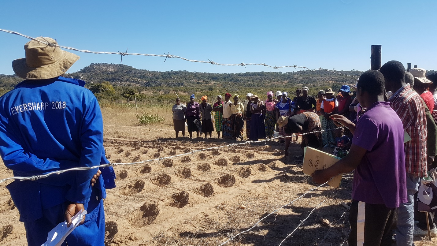 Farmers in Masvingo – Zimbabwe Embrace Agro-ecology Techniques - CYNESA